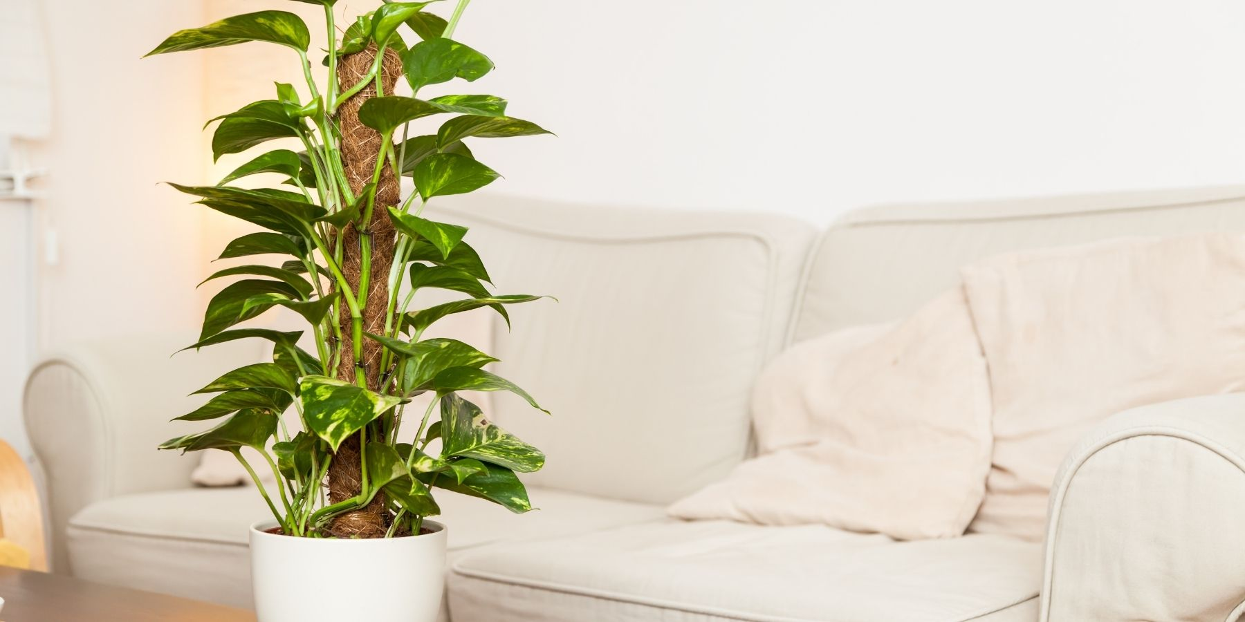 Naturally yours PLANTS